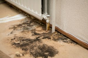suffolk county, long island mold removal